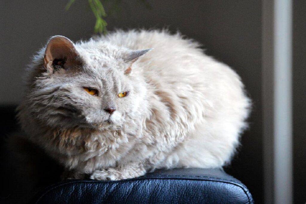 gatto su bracciolo