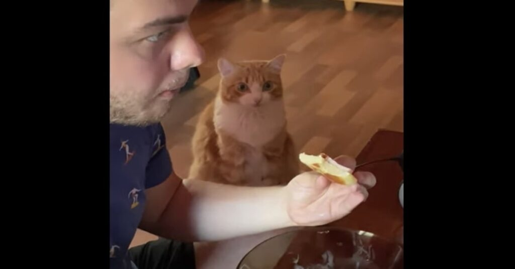 gatto osserva padrone che mangia panino