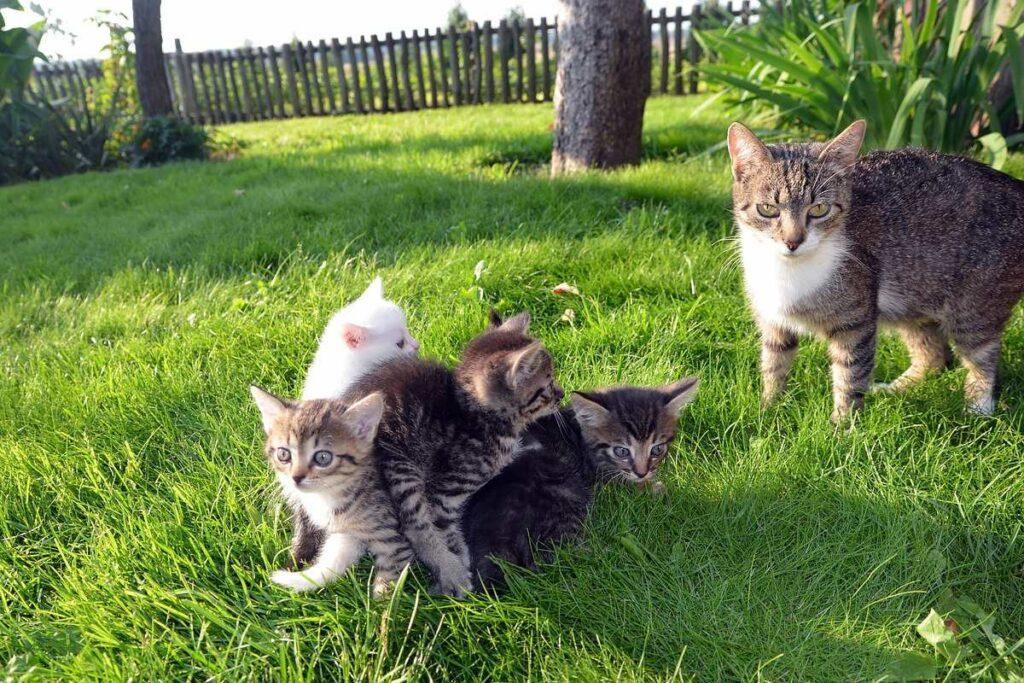 mamma con i gattini
