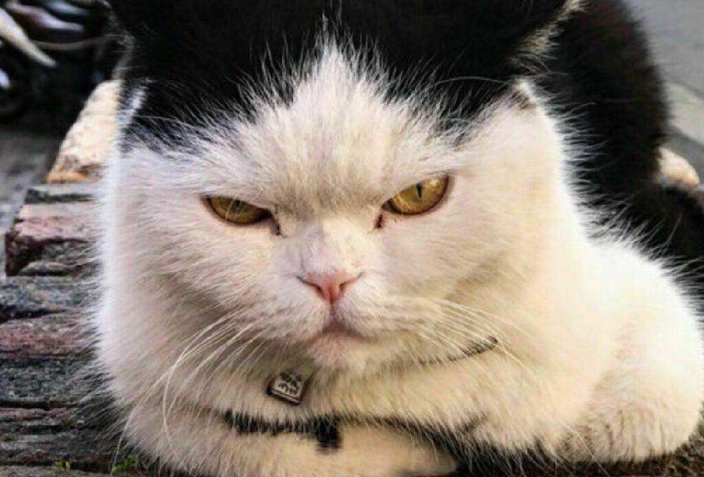 genova gatto arrabbiato mascotte quartiere