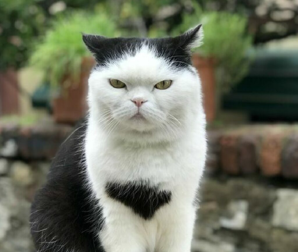 genova seppia gatto popolare social