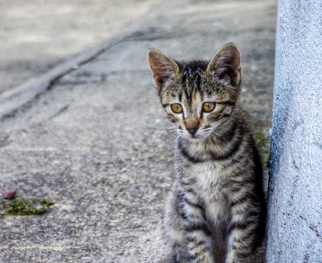 gorizia gatto adesso sta bene dopo visite