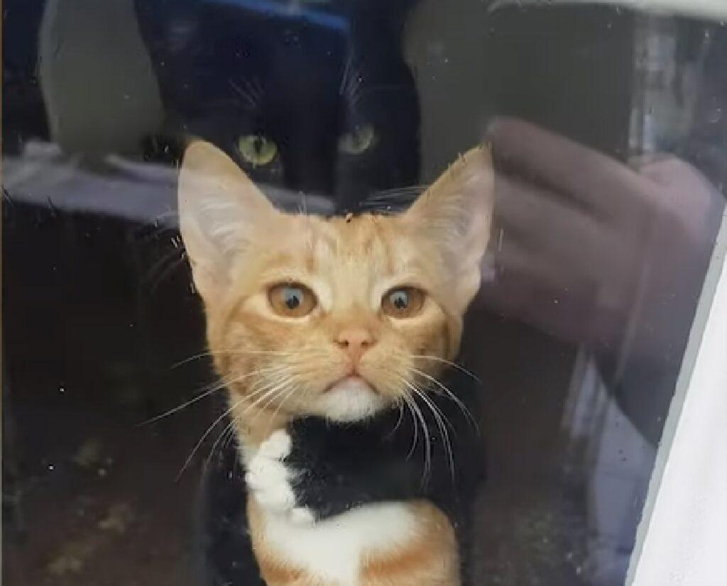 walt jables gattini amore unico