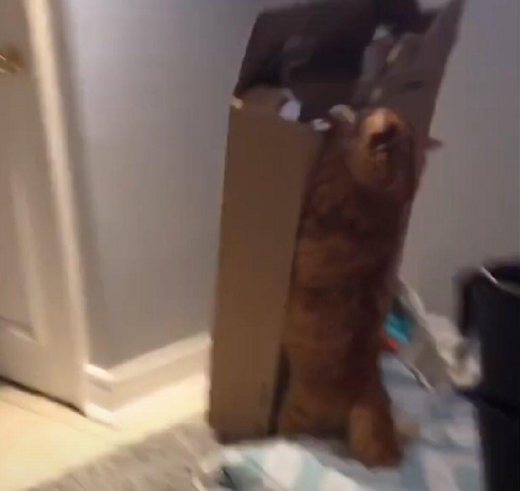 cornelius gattino cerca invano scalata
