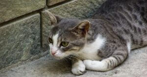 gattino anatra rapporto