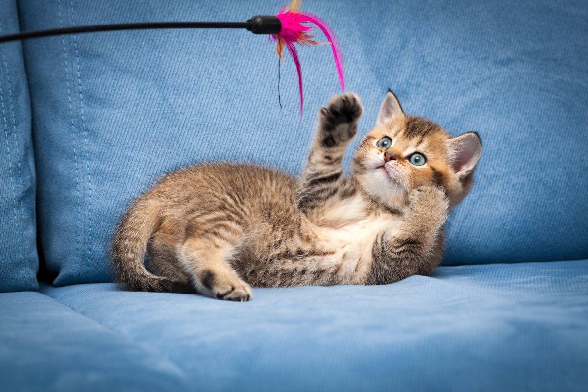 gattino ha paura dei suoi giochi
