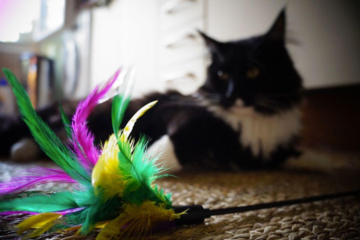 il gattino ha paura dei suoi giochi