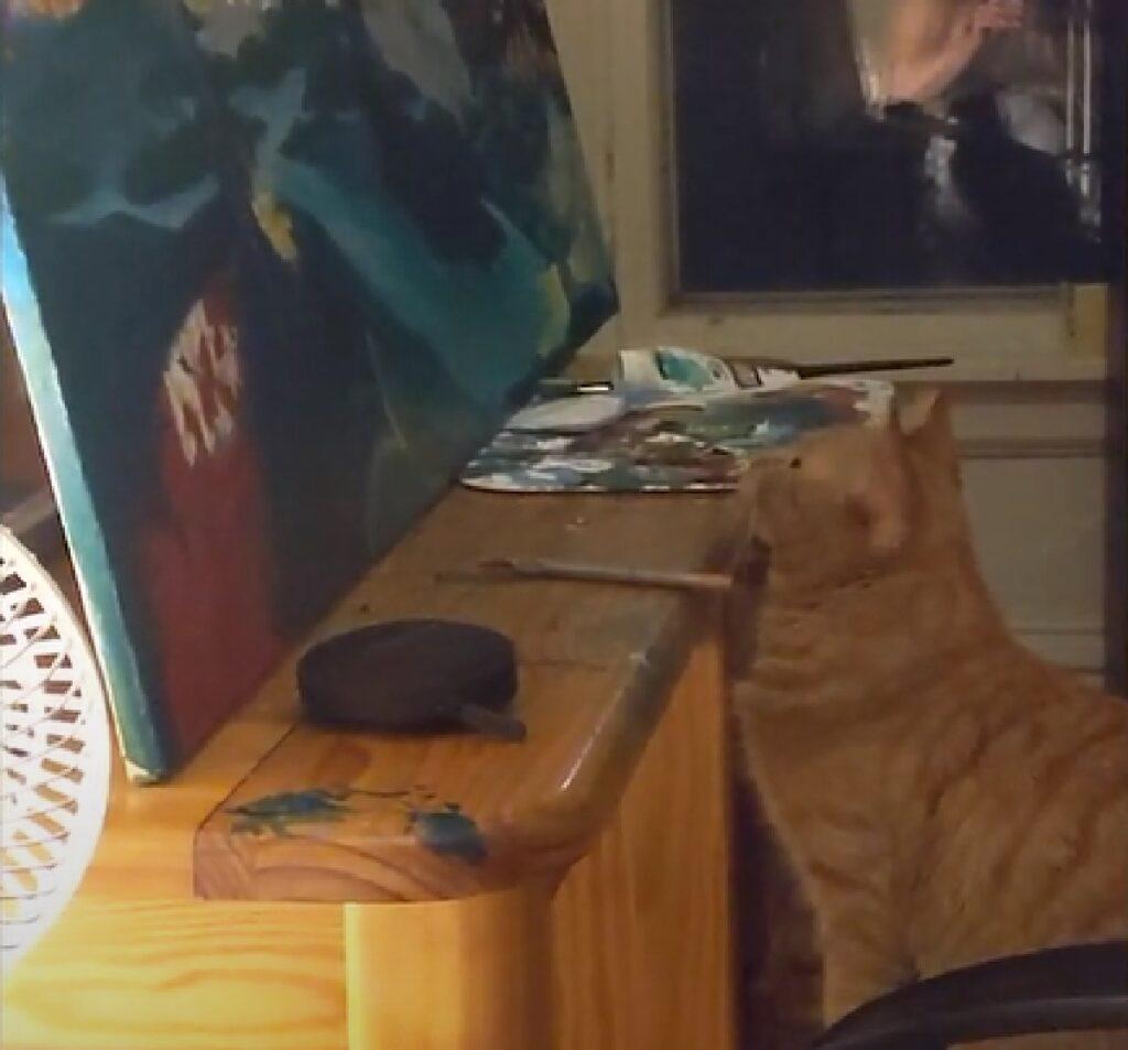 mozzy gattino europeo fissa quadro