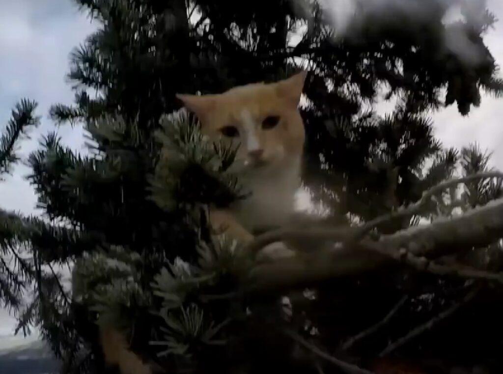 stevens gattino salvataggio su albero altissimo