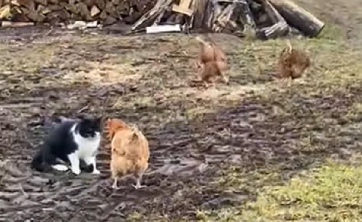 micio dispettoso attacco