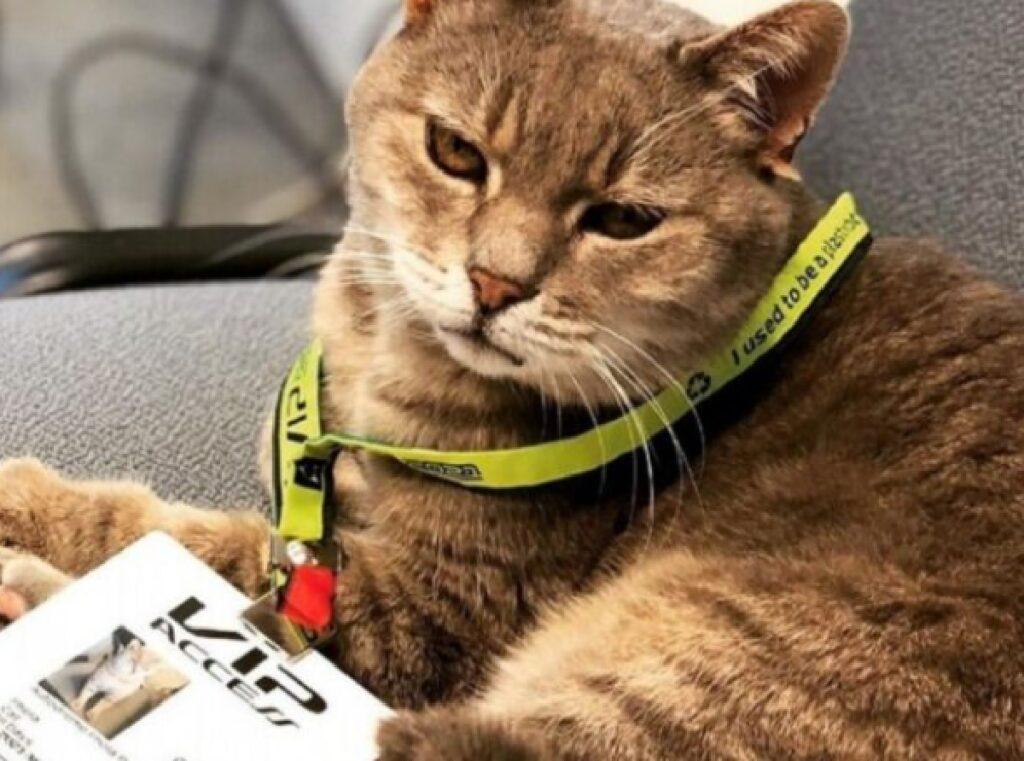 formulino gatto passa autodromo
