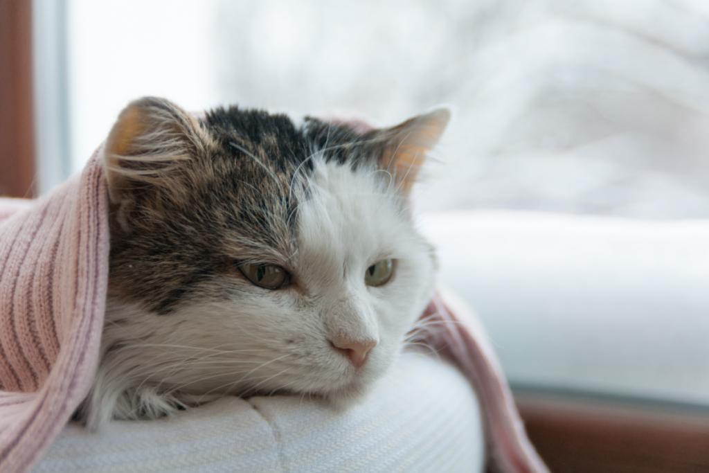 gatto sente freddo