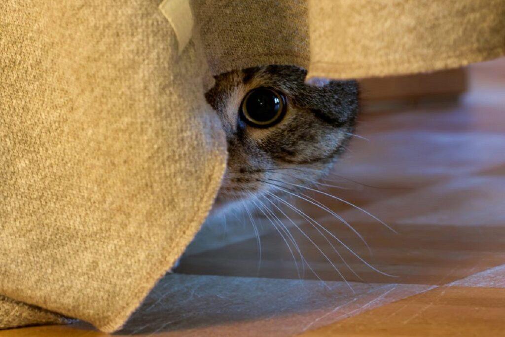 gatto sotto il letto