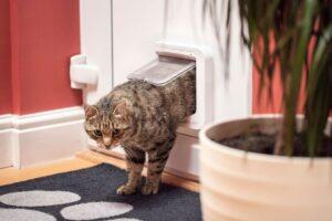 gatto passa dalla sua porticina