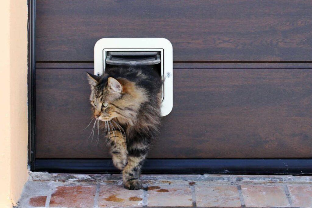 gattaiola per gatti grandi
