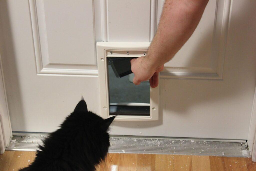 insegnare al gatto a usare la porticina