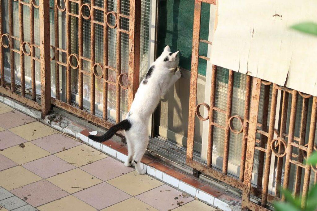 gatto che vuole entrare in casa