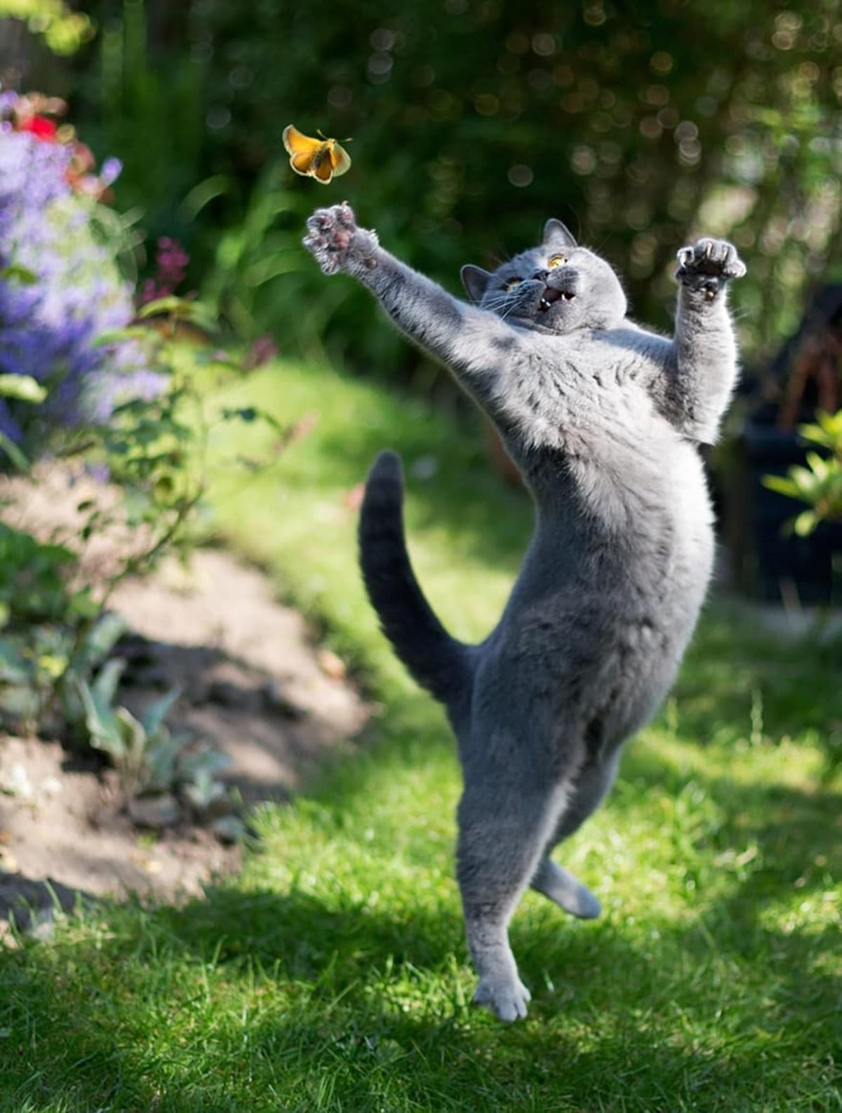 karate cats-acchiappa la farfalla