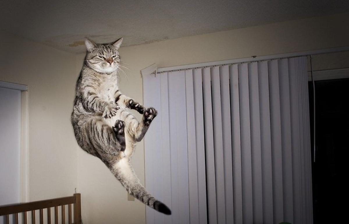 karate cats-levitazione