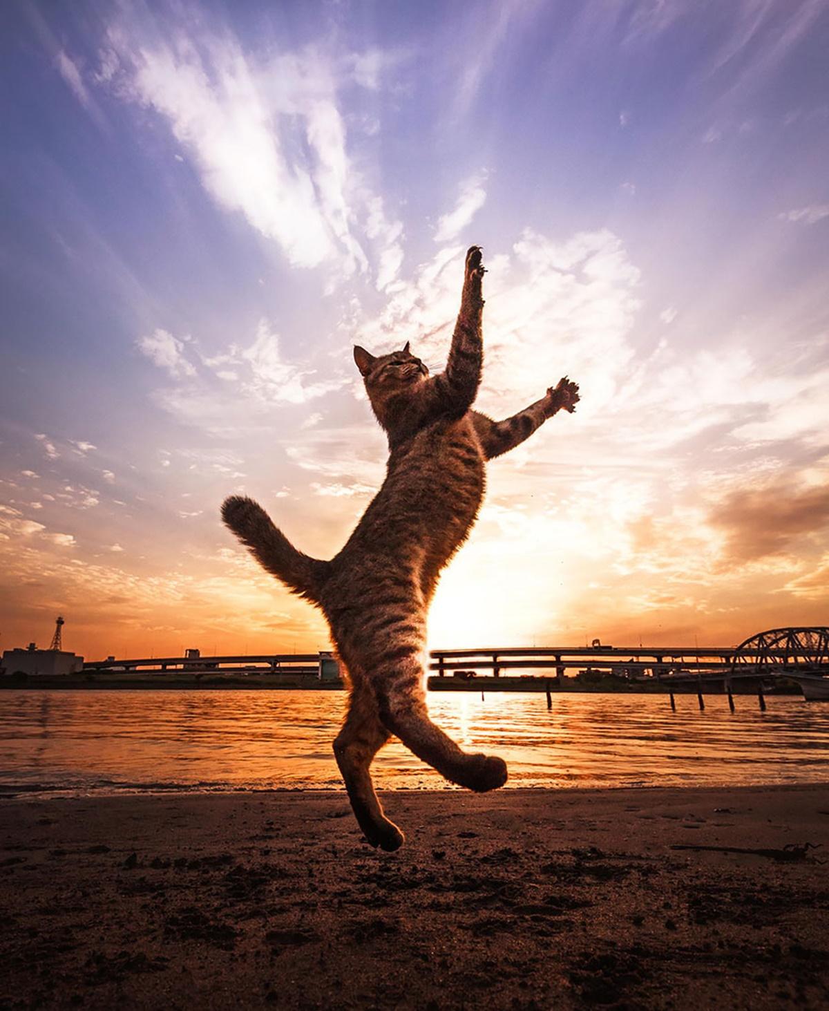karate cats-gatto su sfondo