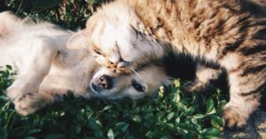 gatto e cane si coccolano
