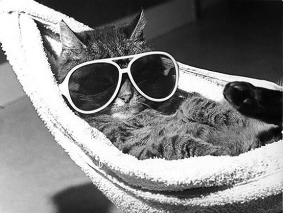 la bella vita da gatto-spiaggia