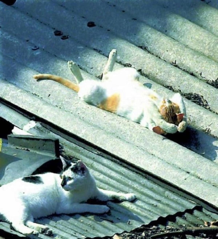 la bella vita da gatto-gatto che prende il sole