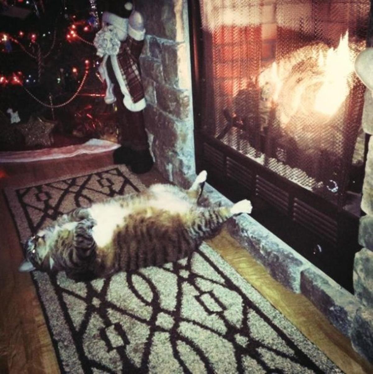 gatto vicino il fuoco