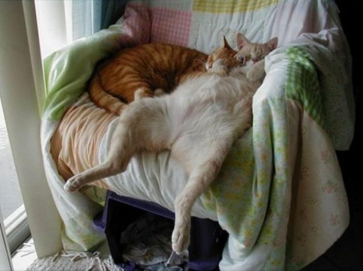 gatti sulla poltrona