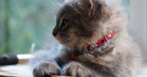 gattina massaggiatrice micia