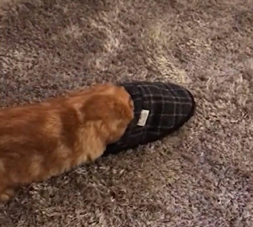 ginny gattina europea prende rincorsa