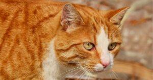 la gattina ginny adora intrufolarsi nelle ciabatte video