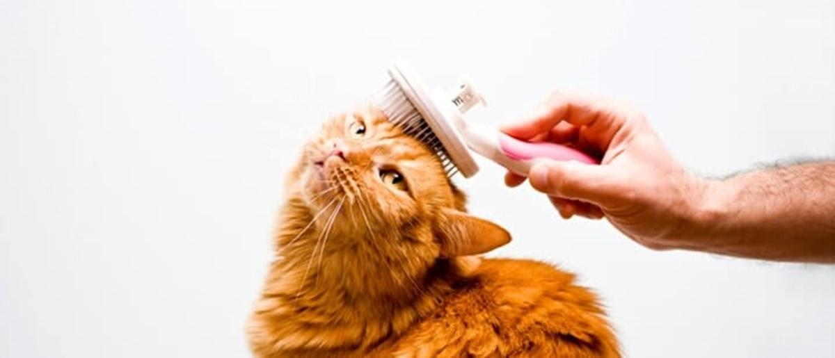 gatto che viene spazzolato