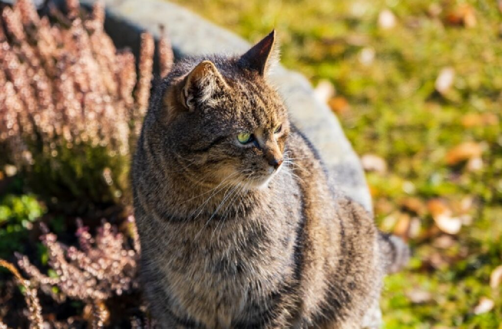leo gatto abbandonato associazione protesta