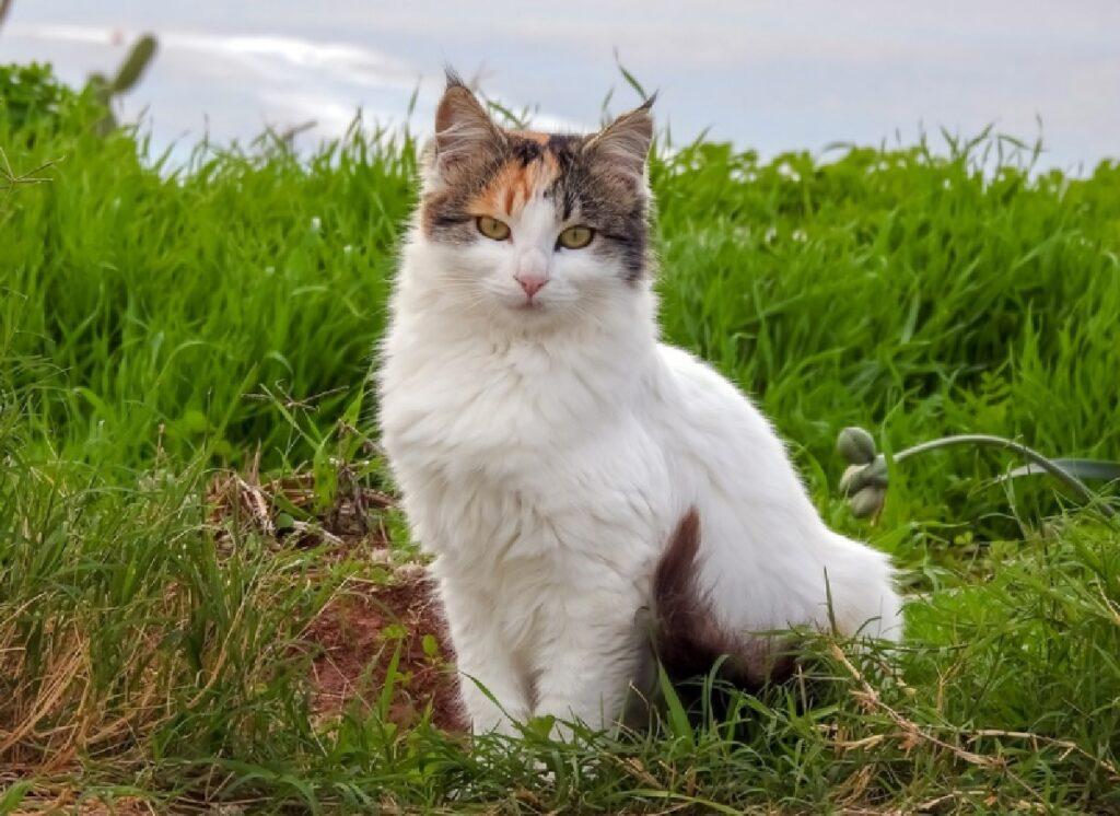 leo gattino abbandonato dopo 3 anni