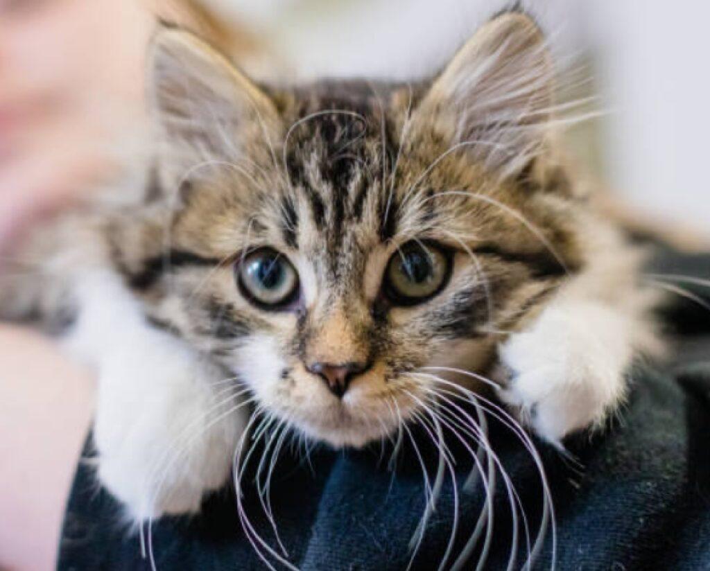 monte argentario gatto segnalazione pericolo di vita