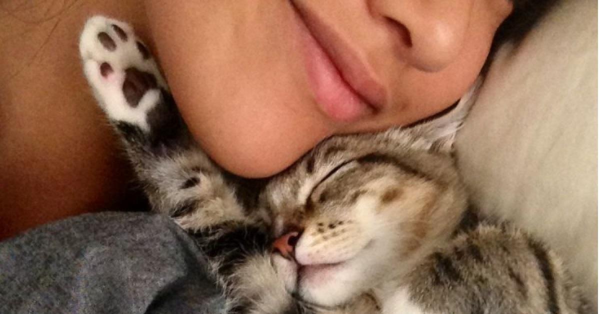 motivi per avere un gatto-fusa