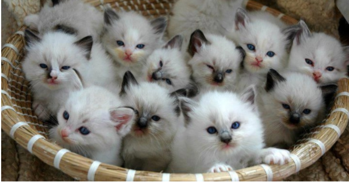 motivi per avere un gatto-longevità