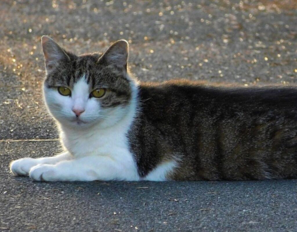 olbia gatto investito e lasciato martoriato su marciapiede