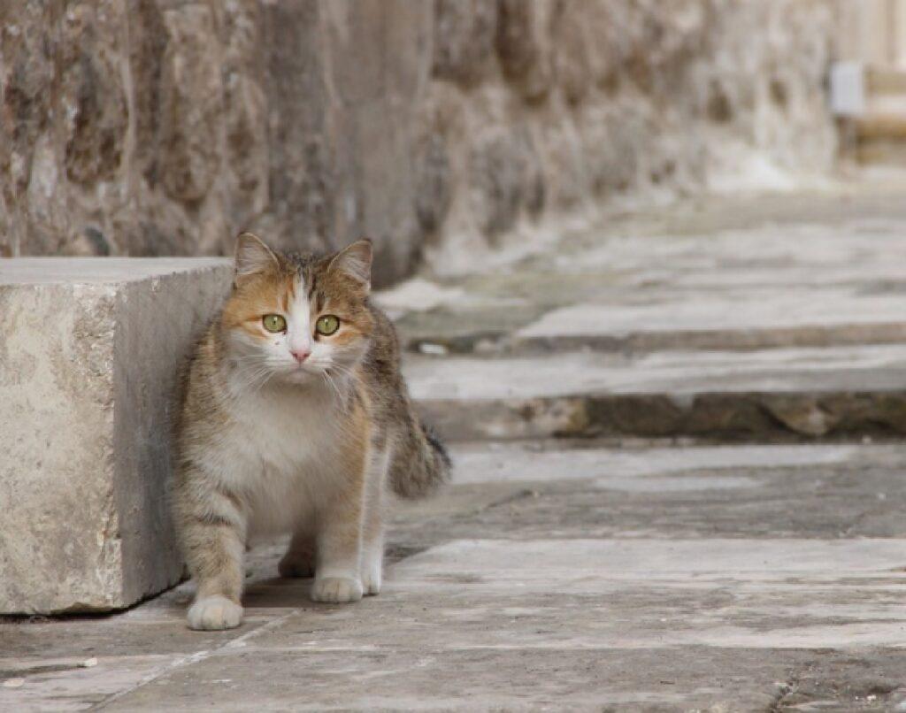 olbia gatto messo sotto auto vicino spiaggia