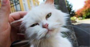 olbia gatto investito lasciato esamine sul marciapiede