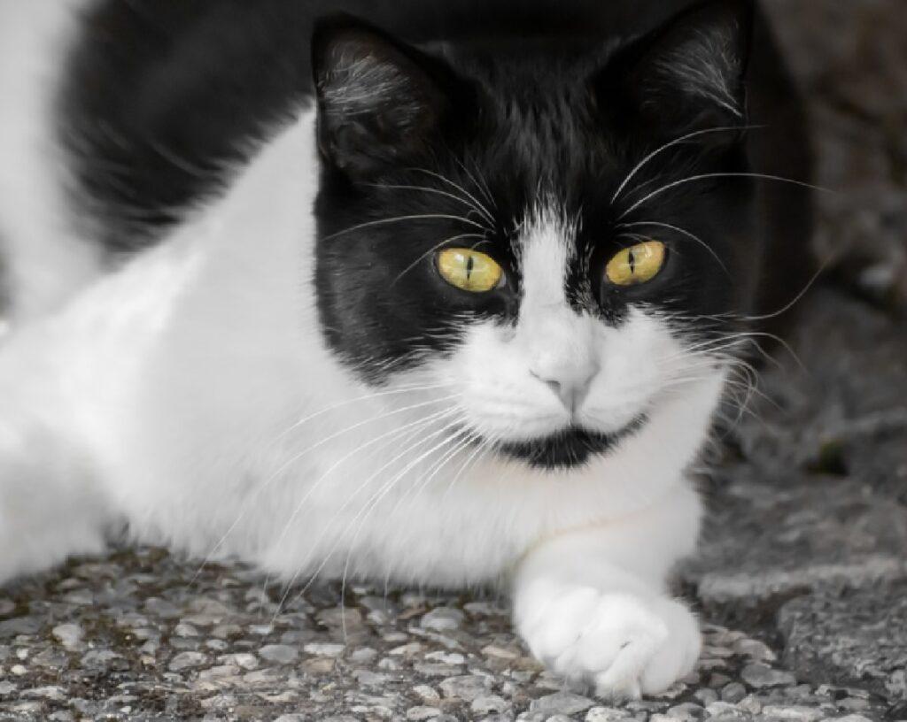 olbia gatto passo strada