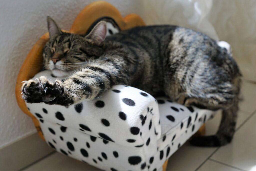 lettino per gatto