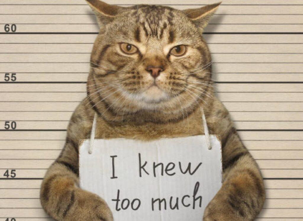 gatto panama prigione idea dietro piano