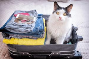 gatto seduto dentro alla valigia