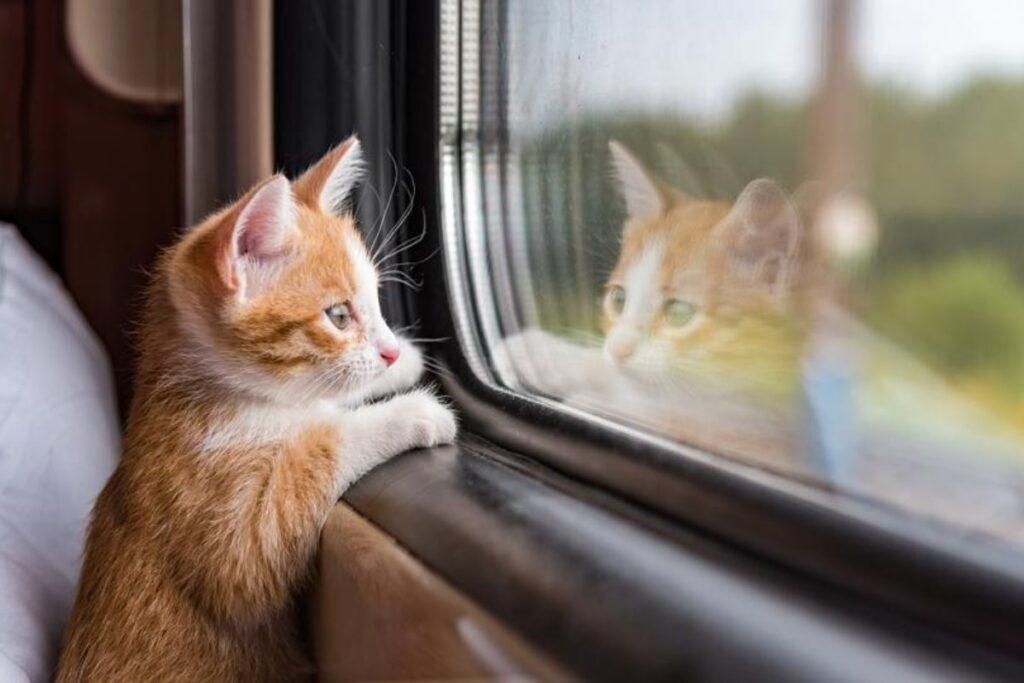 gattino in treno