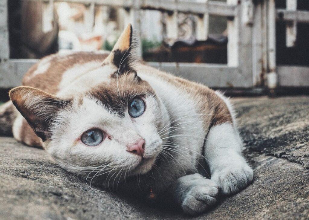 perugia gatto sdraiato per terra