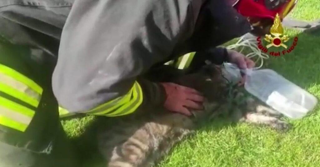 Pompiere rianima un gatto