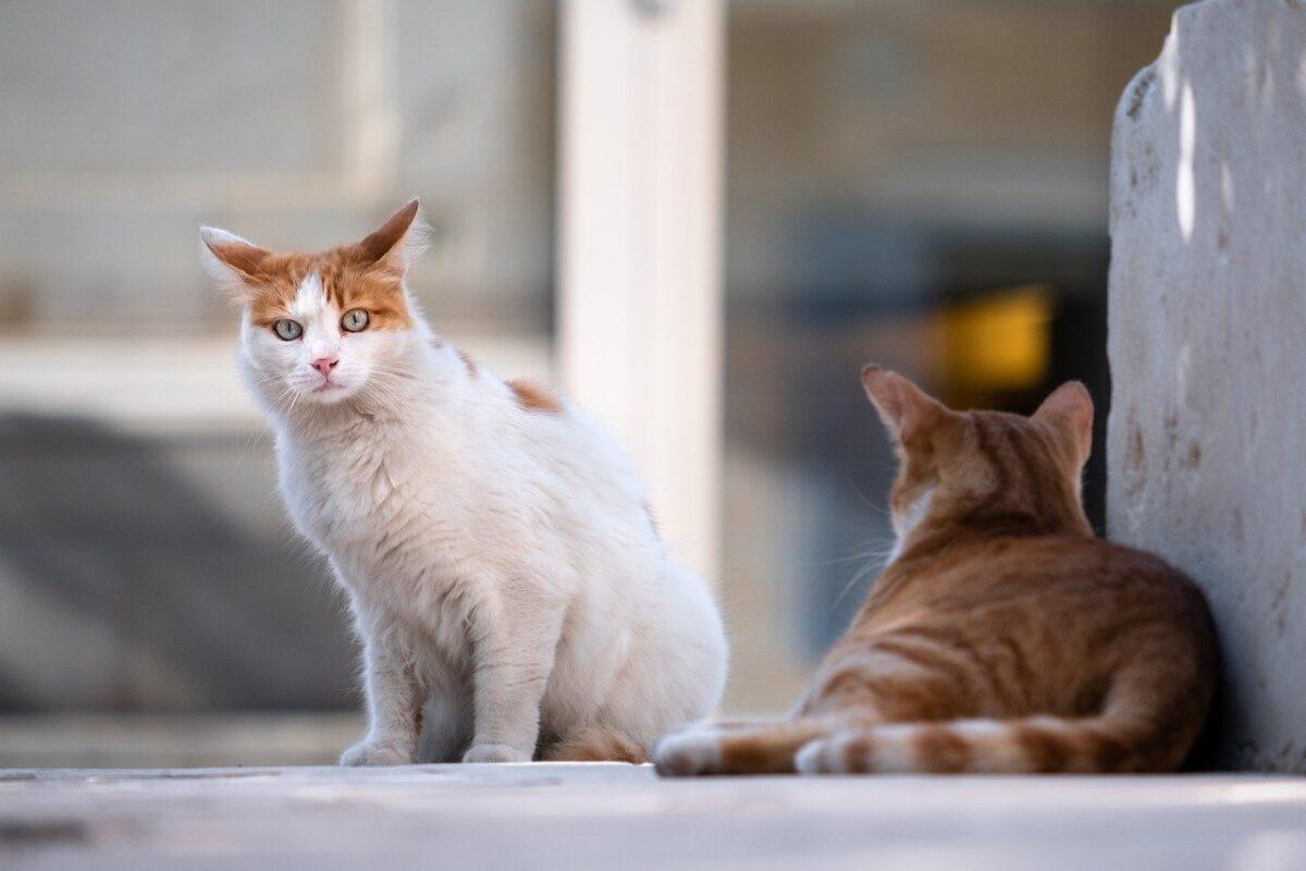 gatti per strada