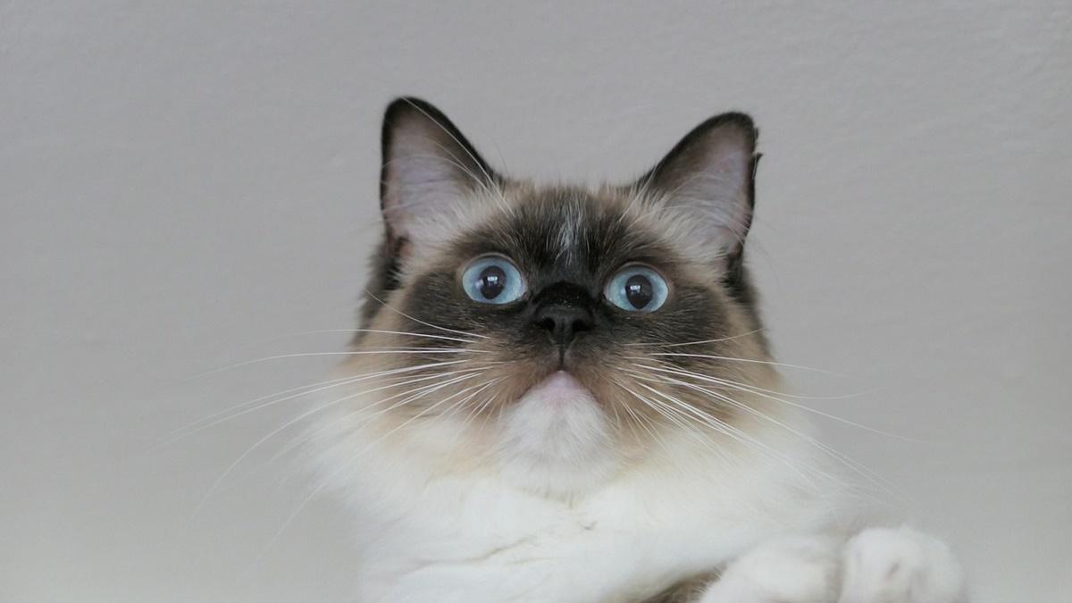 gatto sorpreso